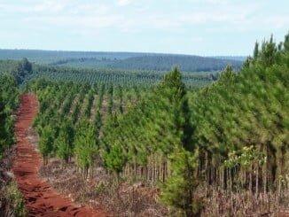 Un fallo en el programa informático de la Junta impide a los forestales solicitar las ayudas de la PAC