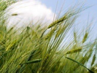 Apuestan por una Política Agraria Común fuerte, más justa y sostenible