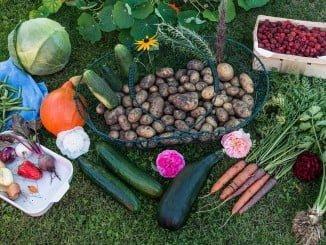 Las legumbres y hortalizas frescas disparan sus precios un 22,2%