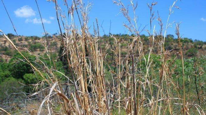 Para Encinal, el principal objetivo del Plan Director ha de ser la erradicación de la Seca