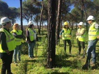 Los trabajos se encuentran en una primera fase de corta y retirada de árboles irrecuperables