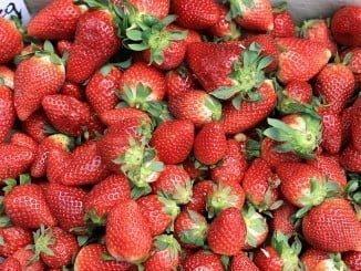 La fresa es uno de los productos de nuestro campo que más se exporta