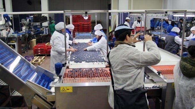 """La """"Berry School"""", que ha tenido lugar en Málaga del 21 al 24 de marzo y finalizó con una visita a las instalaciones de Cuna de Platero en Moguer"""