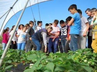 La visita a los campos de fresas permite a los escolares conocer la producción y la importancia del agua.