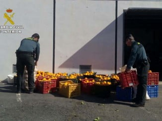 La Guardia Civil recuperó los 500 kilos de naranjas robadas