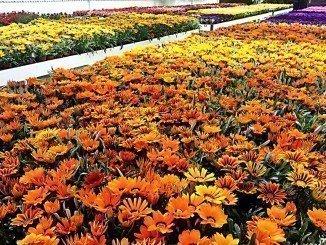 Los ayuntamientos de la provincia pueden renovar sus jardines con las plantas del vivero provincial