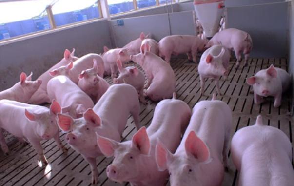 La jornada para la revisión de la ordenación sectorial del porcino intensivo pretendía recoger la opinión de todas las partes implicadas