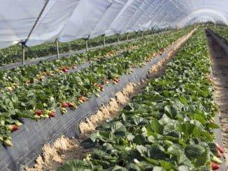 Agricultura es el sector que ha registrado un mayor descenso porcentual, con 1.208 parados menos