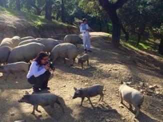 Los periodistas han conocido una de las dehesas donde se cría el cerdo ibérico