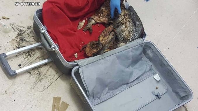 El pescado iba en maletas de viaje y envuelto en sábanas impregnadas en zumo de limón