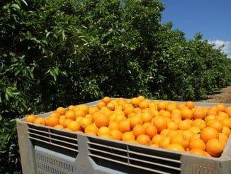 Las empresas del sector como Mundinaranjas trabajan con frutas y verduras de temporada, recogidas en su punto exacto de maduración