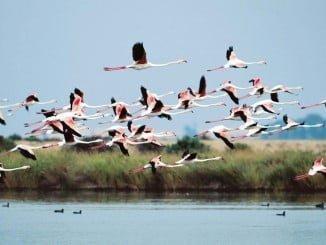 RNE captará el ambiente de la colonia de flamencos y el sonido del bosque de pinos y lagunas