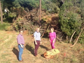 El PSOE, que ha visitado el lugar, quiere saber los verdaderos motivos que han llevado al Ayuntamiento a realizar este atentado contra los pinos piñoneros