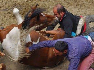 Imagen de un accidente al caer un jinete de su caballo