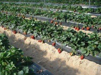 El mayor descenso del paro se ha dado en la agricultura, con un 11,43% menos de desempleados