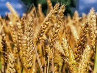 Se han reducido los módulos de cereales, tomate y bovino de leche, entre otros