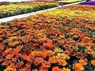En total, se repartirán unas 11.000 plantas a los ayuntamientos de la provincia que lo han solicitado