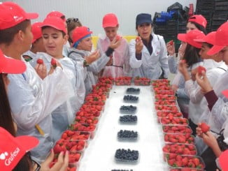 La visita de escolares a las instalaciones de Grufesa ha incluido una divertida cata de fresas