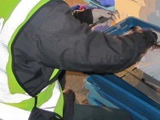Agentes del Seprona han intervenido en el operativo para el control del pescado inmaduro
