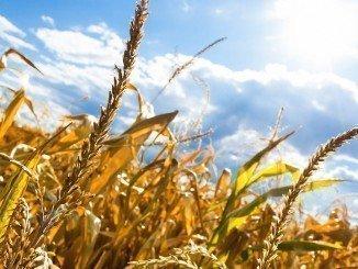 El Gobierno ha puesto en marcha medidas contra situaciones climatológicas adversas como la sequía