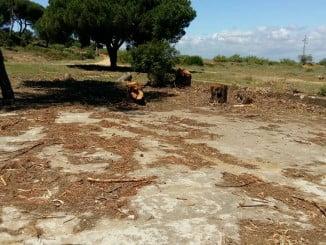 Imagen de la zona donde se han talado los pinos, algunos centenarios, según IU