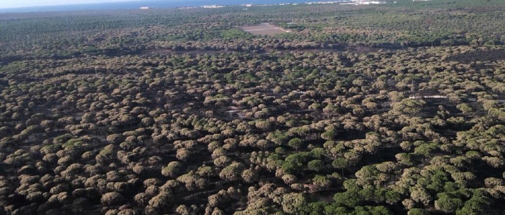 Imagen aérea de Doñana tras el devastador incendio
