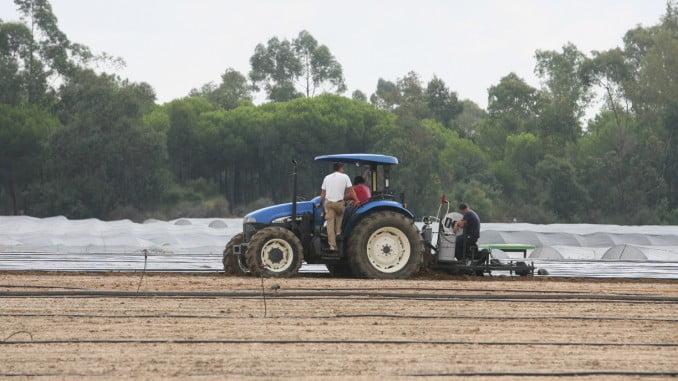Aunque ha descendido el paro en Huelva, en Agricultura se ha incrementado un 26,53%