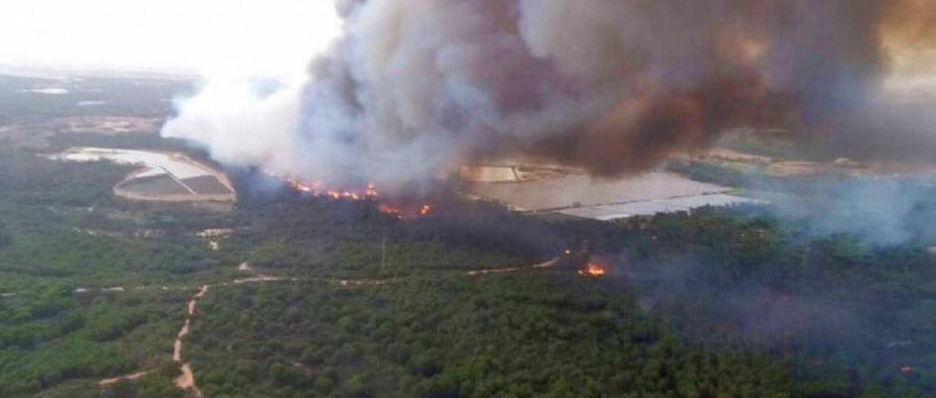 Las llamas ya alcanzan el Espacio Natural de Doñana