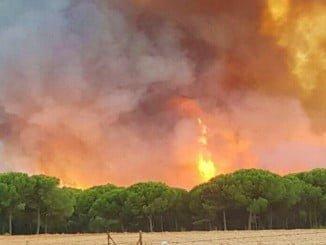 Las llamas amenazan al Parque Natural de Doñana