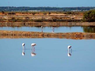 La ampliación de la Reserva de Marismas del Odiel abarca una zona marina de 6.429 hectáreas