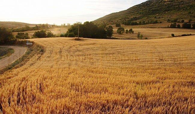 Las ayudas al asesoramiento a explotaciones agrarias ni siquiera se han convocado, estando en desventaja los agricultores andaluces