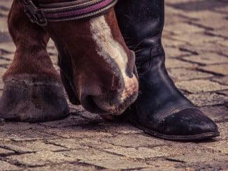 Los podólogos dan una serie de consejos para los pies cansados de los romeros