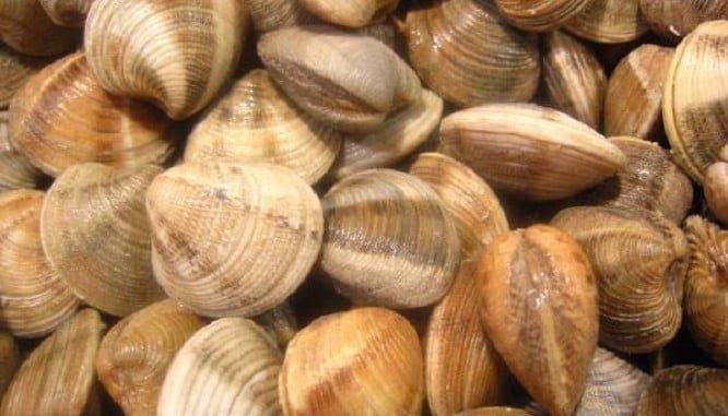 El caladero de la chirla del Golfo de Cádiz  contará con luz verde para el marisqueo el 1 de julio