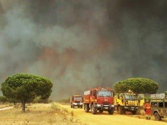 8.486 hectáreas han sido arrasadas en el incendio de Moguer, según el Infoca