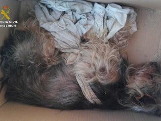 El animal fue trasladado de urgencia en una caja a un veterinario