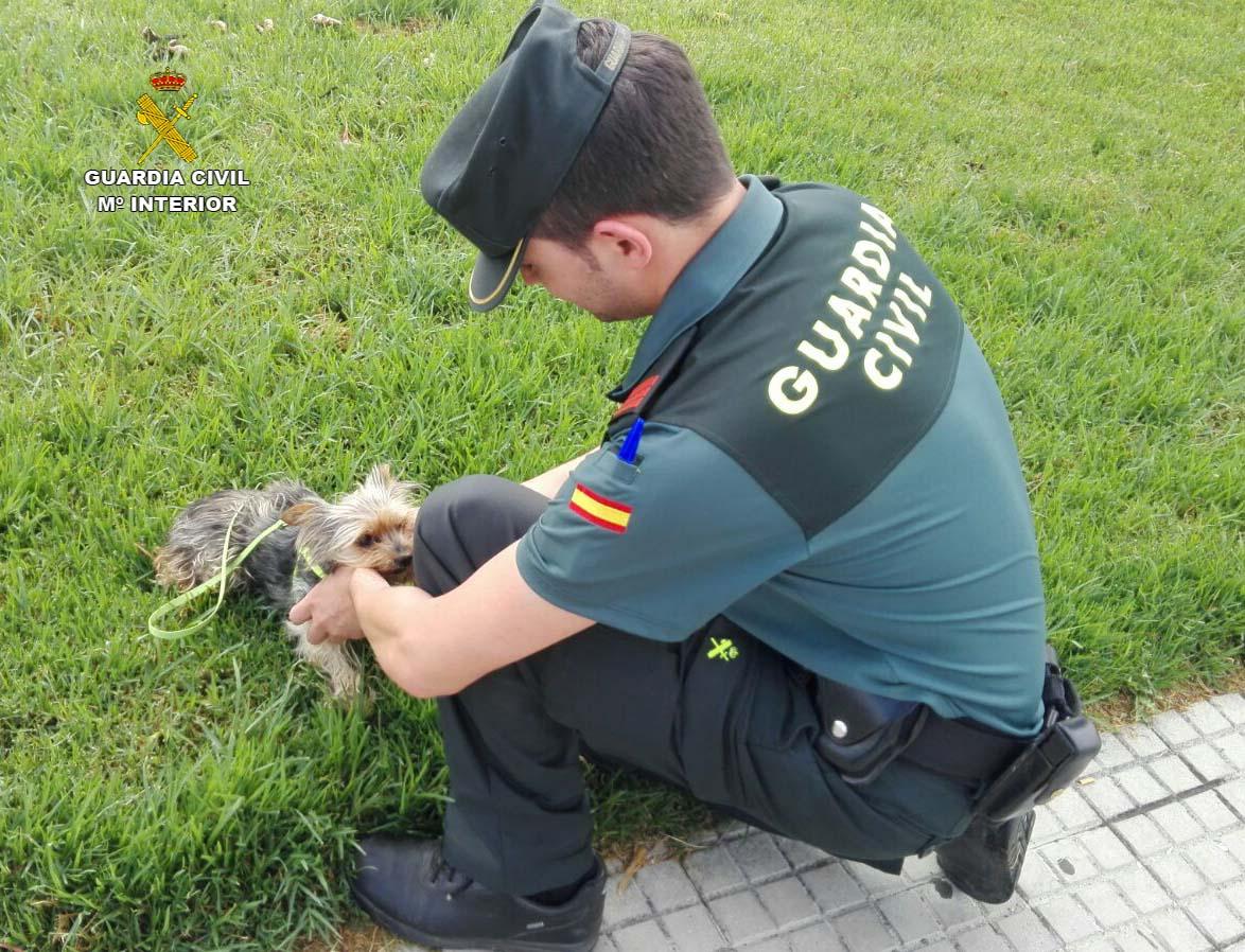 La rápida actuación de la Guardia Civil consiguió salvar la vida del perro malherido