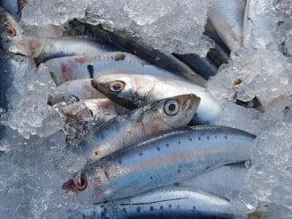 Las jornadas gastronómicas persiguen incentivar el consumo de sardinas, jureles, boquerones y caballas