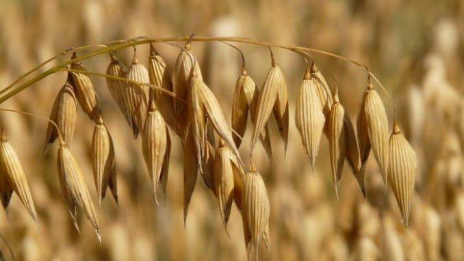 Los cereales son los que más han sufrido las consecuencias de la sequía