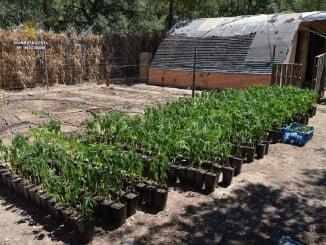 El terreno estaba preparado para la siembra de los plantones de la marihuana