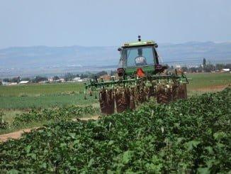 Las ayudas van dirigidas a la incorporación de jóvenes a la actividad agrícola y ganadera