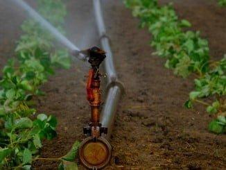 El volumen de agua aplicado a los cultivos mediante aspersión aumentó  un 0,1% en 2015