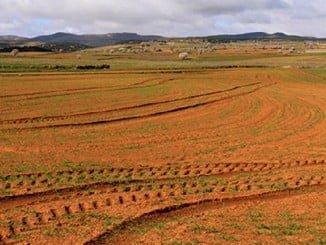 La sequía también es una consecuencia del cambio climático