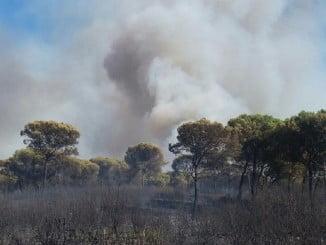Imagen del incendio de Gibraleón facilitada por el Infoca