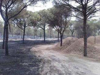 Apilamiento de madera y astillas en los motes de Aljaraque