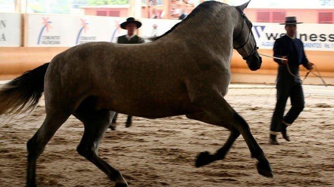 Huelva tiene 1.377 ganaderías que se dedican en exclusiva a la cría de caballos de Pura Raza Española