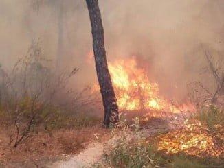 Efectivos trabajando por tierra en el incendio de Cartaya, en una imagen facilitada por el Infoca