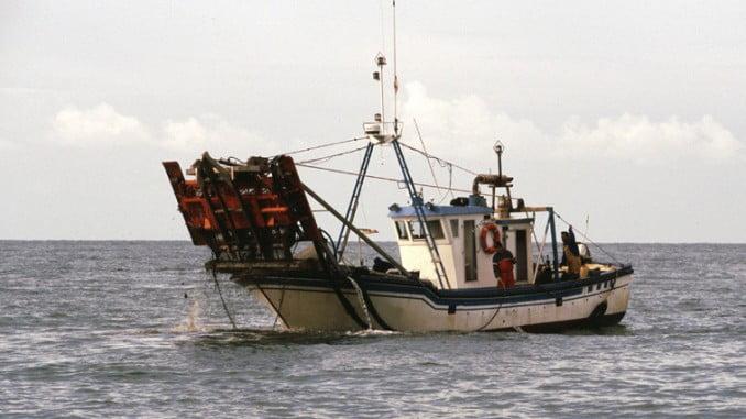 Se aumenta de tres a cuatro horas diarias la pesca para el caladero de chirla del Golfo de Cádiz