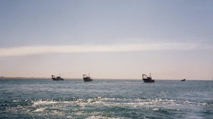 El Ministerio estudia con las cofradías la evolución de los recursos del caladero del Golfo de Cádiz