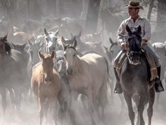 La Recogida de las Yeguas es una tradición y un importante reclamo turístico para Hinojos