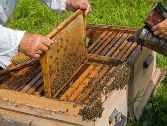 En la provincia de Huelva han resultado beneficiados con estas ayudas 128 apicutores que percibirán en total 214.31 euros